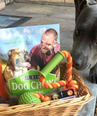 Creative Gift Idea for Your Dog
